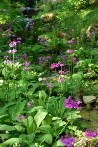 六甲高山植物園 - 高原に行きたい