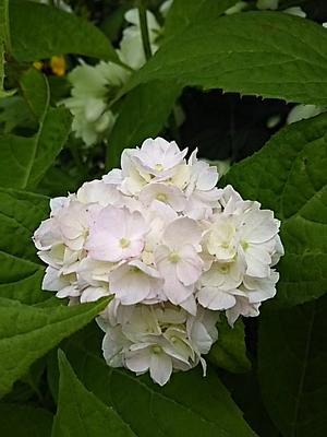 庭花色々~ - ちゃたろうと気まま日記