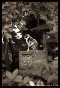 白山神社の猫 - TI Photograph & Jazz