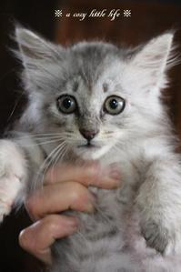 週末の子猫のグレーちゃん - a cozy little life
