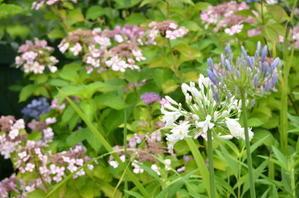 6月28日@花の庭の様子。 - モネの庭だより
