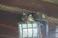 Leaving the nest (巣立ち) - ファルマウスミー
