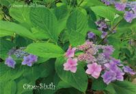 ジャングルお庭の紫陽花と「ハウス-フランチェスカ」追加画像 - ドールハウス 手作り夢工房