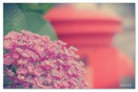 雨の香り。 - Yuruyuru Photograph