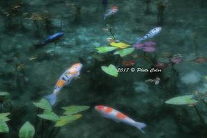 モネの池(通称)名もなき池の夏 - Photo.Color