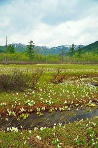 ミズバショウの湿原Ⅲ - 風の香に誘われて 風景のふぉと缶