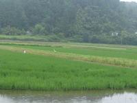 梅雨時の花 - 千葉県いすみ環境と文化のさとセンター