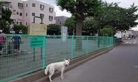 Vol.1201 京町公園 - 小太郎の白っぽい世界