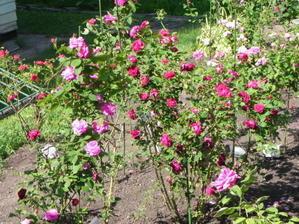 見晴公園だよりバラ花壇 - 函館市住宅都市施設公社 スタッフブログ