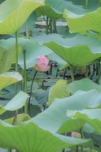 Lotus fantasy 4 - 気ままにお散歩
