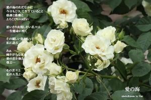 愛の海 - 花の咲み、花のうた、きらめく地上 ―― photo&poem gallery kannon花音