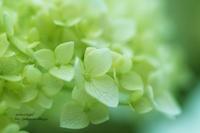 Lime green - jumhina biyori*