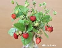 小さいイチゴだよ♪ - White Love