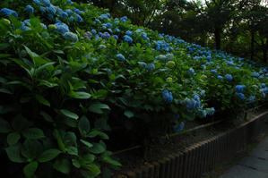 山田池公園sd Q - 写真部