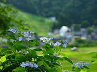 美しい紫陽花 - デジタルで見ていた風景