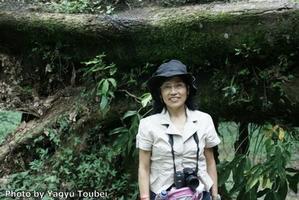 コスタリカ倒れた巨木と発色 - とことん写真