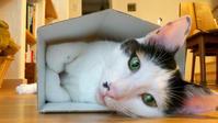 三年遅れの猫日記-29- - 猫と夕焼け