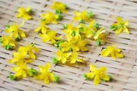 6/27 インフューズドオイル用のハーブ - 「あなたに似た花。」