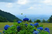 山林に咲く紫陽花 - デジカメ入門