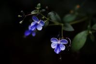 --- 花の名 --- - Rphotography