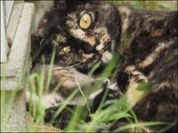 ボボとその仔猫たち_VIII - L'Ambiance du Midi