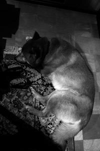Navi #01 - Yoshi-A の写真の楽しみ