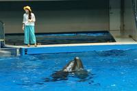 イルカが覚えた新しい芸は、イルカのチュー(アクアパーク品川) - 旅プラスの日記