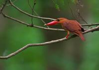 遠征 終り - 今日も鳥撮り