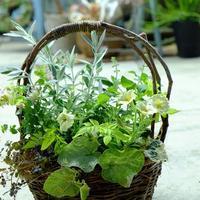 夏に向けての寄せ植え - mon dimanche blog
