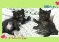 昨年度の東京都の殺処分数 - ゆきももこの猫夢日記