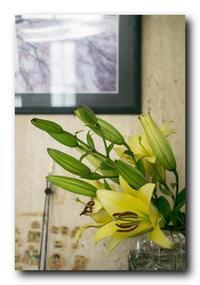 ユリの花が我が家にやって来た。 - 気まぐれフォト