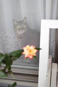 薔薇が咲いた♪ - きょうだい猫と仲良し暮らし