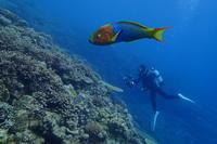 17.6.29 北部遠征! - 沖縄本島 島んちゅガイドの『ダイビング日誌』