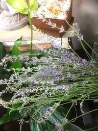 ラベンダーの季節・香りに癒される日 - ルーシュの花仕事