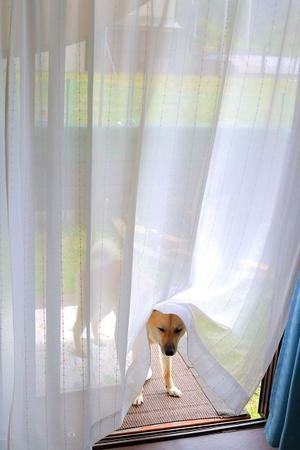 ヒトコマ写真(53) - 結局ただの犬バカです。