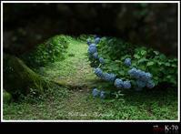 六月の花 - ― At my color ―   心に響いた瞬間と 時々気まぐれにつぶやきと。
