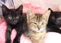 センター収容子猫 - 家なき猫