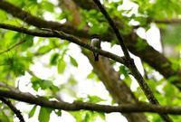 2017年6月 - 青梅から花鳥風景