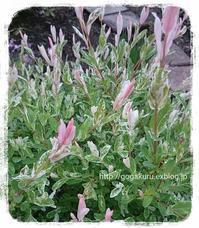 【雑記】ピンクの細い花 【英】例文【英5トレ言葉】忙し… - 【まんが&フォト】 ほかの国のコトバ ― 8言語つまみぐい