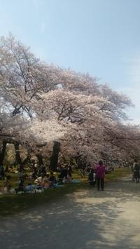 お花見@小石川植物園 - Les feuilles du coeur