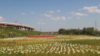 チューリップ畑@都市農業公園 - Les feuilles du coeur