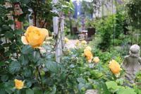 薔薇からクレマチスへ - kekukoの薔薇の庭