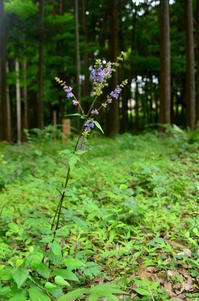 6月の森 - つれづれ日記