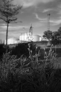 夕暮れ間近の引込み線 - Film&Gasoline