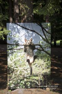 ねこ科 札幌芸術の森 野外写真展にて - ekkoの --- four seasons --- 北海道