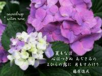 紫陽花月つごもり *the end of Hydrangea Month - ももさへづり*うた暦*Cent Chants d' une Chouette