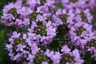 タイムの花* のころ - FUNKY'S BLUE SKY