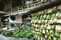 下鴨神社にて   ~フォトハイキング - すずめtoめばるtoナマケモノ