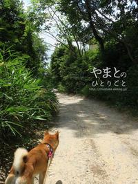 久しぶりに走った。【フォトムービーあり】 - yamatoのひとりごと
