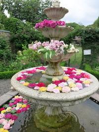 10周年の軽井沢レイクガーデン*バラが満開です♡ - ぴきょログ~軽井沢でぐーたら生活~